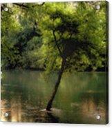 The Tree Island Acrylic Print