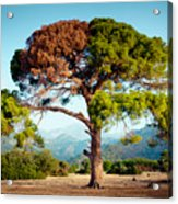 The Tree Of Life And Dead Acrylic Print