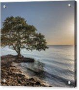The Tree Of Life Acrylic Print