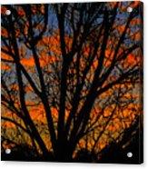 The Tree Of Shapes Acrylic Print