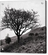 The Tree On The Fell Acrylic Print
