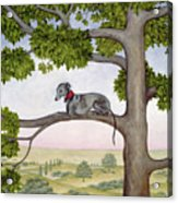 The Tree Whippet Acrylic Print