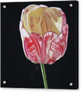 The Tulip Acrylic Print