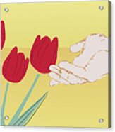 The Tulips Acrylic Print