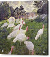 The Turkeys At The Chateau De Rottembourg Acrylic Print by Claude Monet