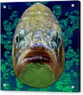The Ugliest Fish Ever Acrylic Print