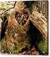 The Valentine Tree 1 Acrylic Print