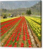 The Valley Blooms Acrylic Print
