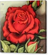 The Very Red Rose Acrylic Print