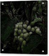 The Vineyard Acrylic Print