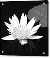 The Vintage Lily II Acrylic Print