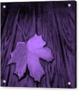 The Violet Leaf Acrylic Print