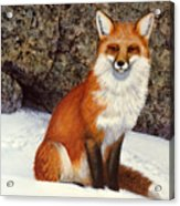 The Wait Red Fox Acrylic Print