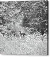 The Wanderer Acrylic Print