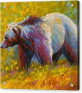 The Wandering One - Grizzly Bear Acrylic Print