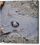 The Water Bubble Acrylic Print