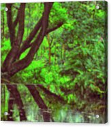 The Water Margins - Nutclough Woods Acrylic Print