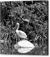 The Waterbirds Acrylic Print