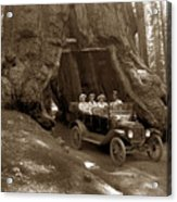 The Wawona Tree Mariposa Grove, Yosemite  Circa 1916 Acrylic Print