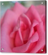 The Whisper Of A Rose Acrylic Print