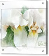 The Whispering Irises Acrylic Print