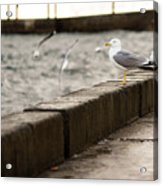 The White Bird Acrylic Print