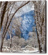 The White Forest Acrylic Print