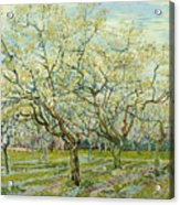 The White Orchard  Acrylic Print
