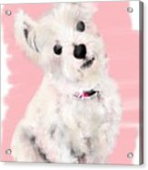The White Pooch Acrylic Print