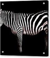 The White Stripes Acrylic Print