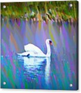 The White Swan Acrylic Print by Bill Cannon