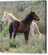 The Wild And Free  Acrylic Print