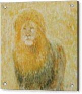 The Wild  Lion Acrylic Print