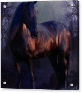 The Wild Mare Acrylic Print