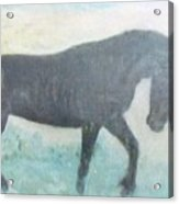 The Wild Stallion Acrylic Print