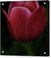 The Wild Tulip Acrylic Print