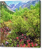 The Wildflowers Of Lundy Canyon Acrylic Print