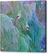 The Willows Acrylic Print