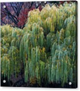 The Willows Of Central Park Acrylic Print