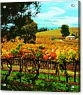 The Winemakers Residence Acrylic Print