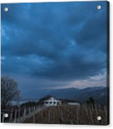 The Wineyard Acrylic Print