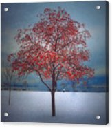 The Winter Berries Acrylic Print