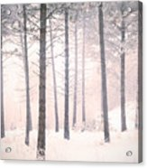 The Winter Forest Acrylic Print