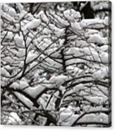 The Winter Has Arrived Acrylic Print