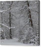 The Winter Path Acrylic Print