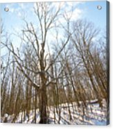 The Winter Woods Acrylic Print by Tim Fitzwater