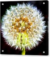 The Wish Acrylic Print
