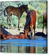The Wonder Of It All Acrylic Print by Jeanne  Bencich-Nations