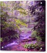 The Wonder Of Nature Acrylic Print