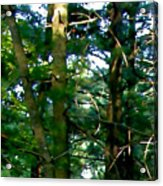 The Woodpecker Acrylic Print